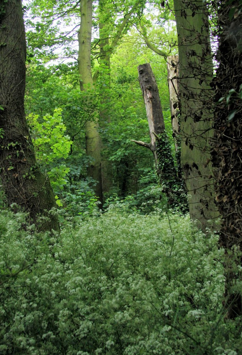 Woodland at Dents Garth, Roos, East Yorkshire